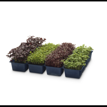 ANL Plastics packaging packaging for Koppert Cress